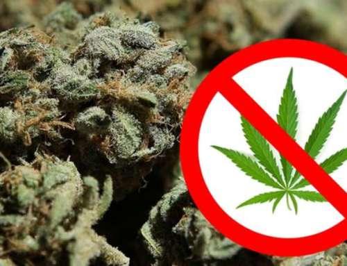 """La Cassazione a Sezioni Unite prende posizione sul divieto di commercializzazione della """"cannabis light"""""""